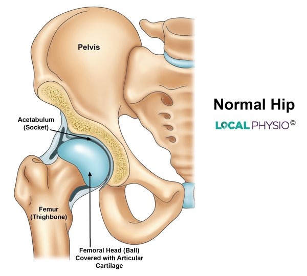 Hip Replacement Local Physio